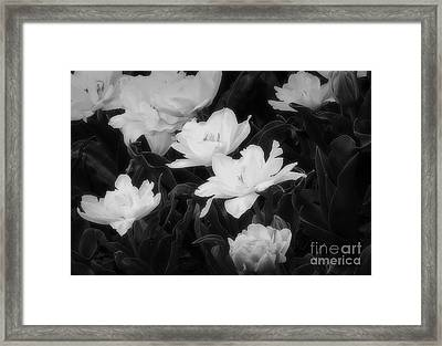 Floral Delicacy Framed Print by Fred Lassmann