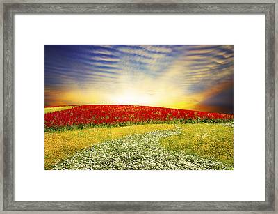 Floral Field On Sunset Framed Print by Setsiri Silapasuwanchai