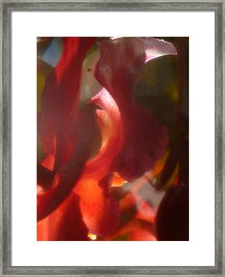 Floral Flamenco Framed Print