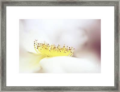Floral Flow Framed Print by Jacky Parker