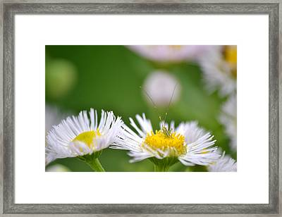 Framed Print featuring the photograph Floral Launch-pad by JD Grimes