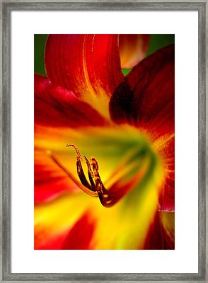 Floral Macro Of A Blossom Framed Print by Floyd Menezes