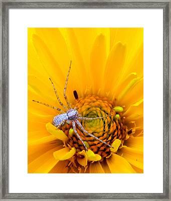 Floral Spider Framed Print by Mark J Seefeldt