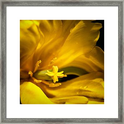 Floral Star Framed Print