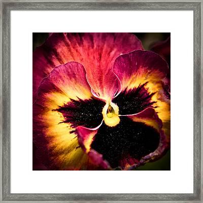 Floral Sunburst Framed Print by Denis Lemay