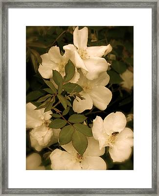 Framed Print featuring the photograph Floral Vignette by Robin Regan