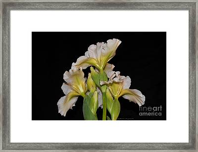 Floral White Iris Buds Flower Bouquet Framed Print