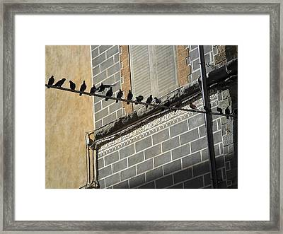 Framed Print featuring the photograph Florentine Pigeons by Laurel Best