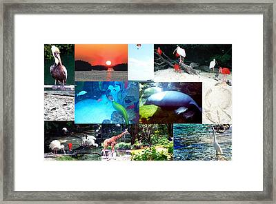 Florida Collage 001 Framed Print by Maureen E Ritter