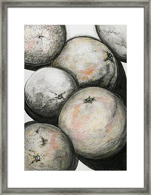 Florida Grapefruit Framed Print by Rebecca Moore