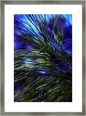 Florida Grass Framed Print