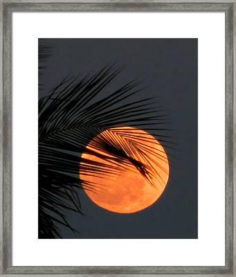 Florida Moonrise Framed Print