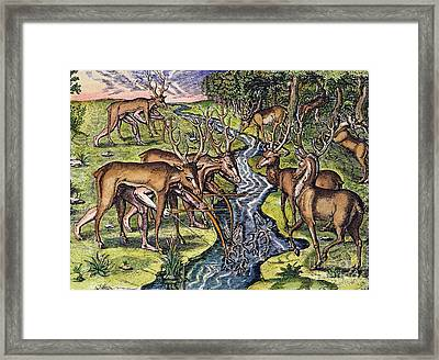 Florida Native Americans: Hunt, 1591 Framed Print
