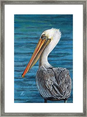 Florida Pelican Framed Print by Peggy Dreher
