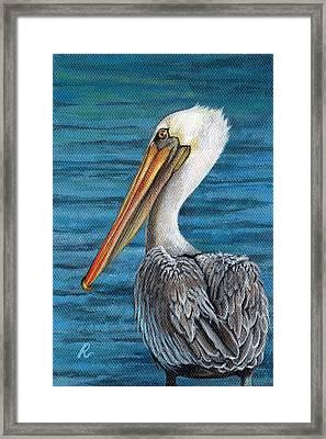 Florida Pelican Framed Print by Peggy Dreher