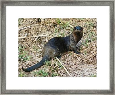 Florida River Otter Framed Print