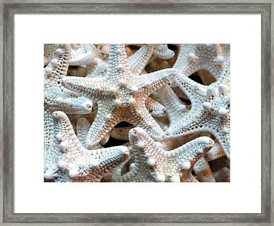 Florida Sea Stars Framed Print by Valia Bradshaw