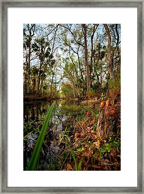 Florida Stream Framed Print by Christopher Holmes