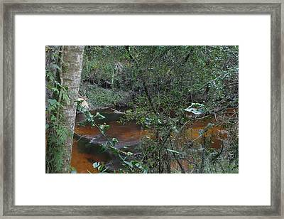Florida Tea Framed Print by Sean Green