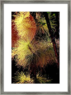 Florida Tree Framed Print
