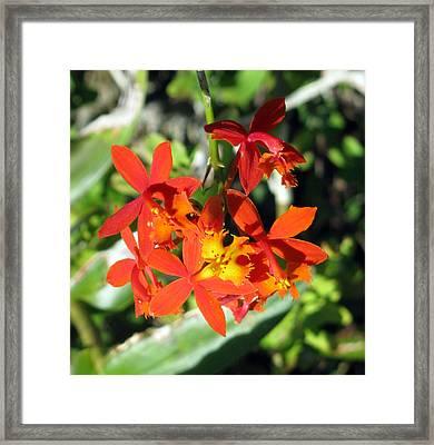 Florida Wild Iris Framed Print by Debi Singer