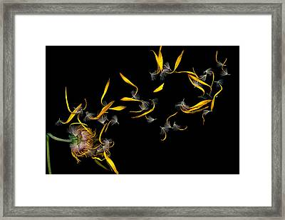 Flower - Daisy - Gone With The Wind Framed Print