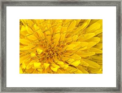 Flower - Dandelion Framed Print by Mike Savad