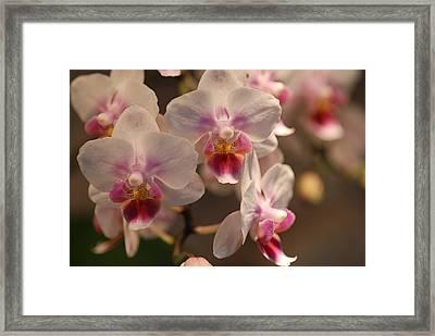 Flower 05 Framed Print