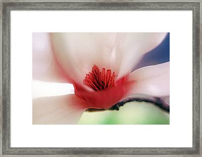 Flower 27 Framed Print