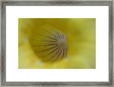 Flower After The Rain Framed Print by Michael Krahl