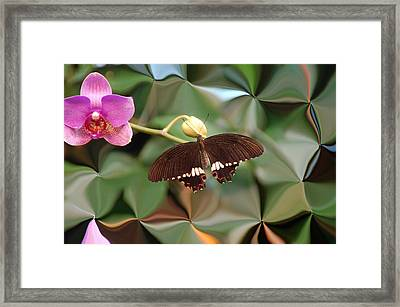 Flower And Butterfly Framed Print by Aimee L Maher Photography and Art Visit ALMGallerydotcom
