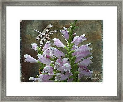 Flower And Dragonfly Framed Print by Jim Wright