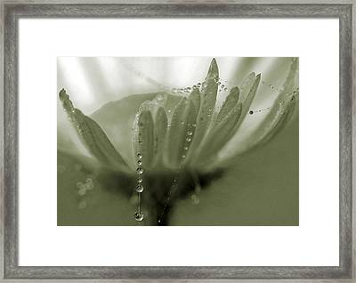 Framed Print featuring the photograph Flower And Drops by Odon Czintos