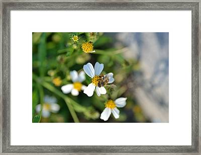 Flower And Insect  Framed Print by Ahmet Ozbek