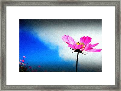Flower And Sky Framed Print by Sanjay Avasarala