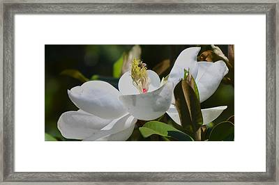 Framed Print featuring the photograph Flower And The Bee by Rima Biswas