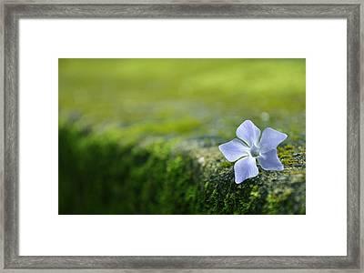 Flower Framed Print by Armando Carlos Ferreira Palhau