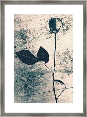 Flower Art Framed Print by Falko Follert