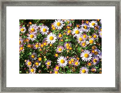 Framed Print featuring the photograph Flower Assault by Jim Moore