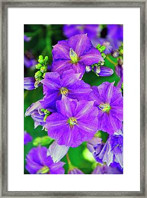 Flower At Houmas House Framed Print