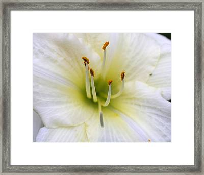 Flower At Noon Framed Print by Bret Worrell