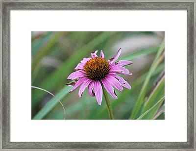 Flower At Waterfall Glen Forest Preserve Framed Print by Peter Ciro