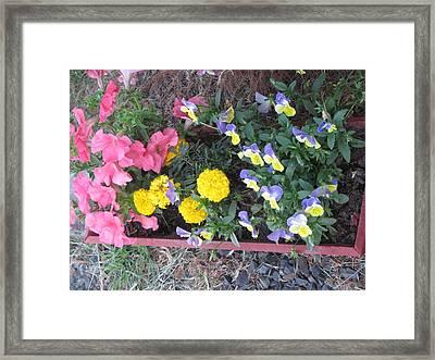 Flower Basket 2 Framed Print by Amy Bradley