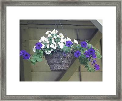 Flower Basket 3 Framed Print by Amy Bradley