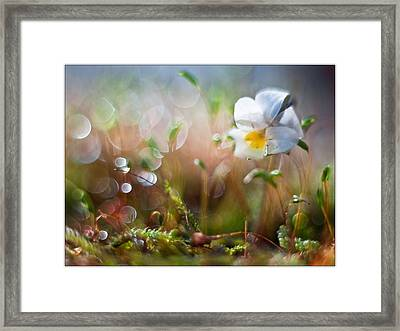 Flower Bell Framed Print by Adrian Krol