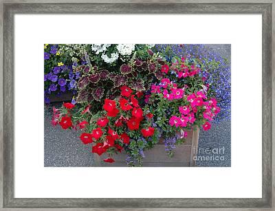 Flower Box Framed Print by Vilas Malankar