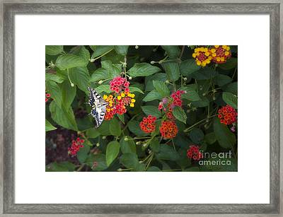 Flower By Flower Framed Print by Roberto Bettacchi