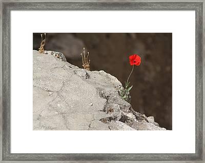 Flower By The Pool Of Bethesda - Israel Framed Print