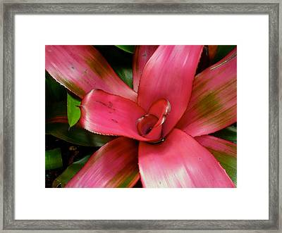 Flower Candy Framed Print