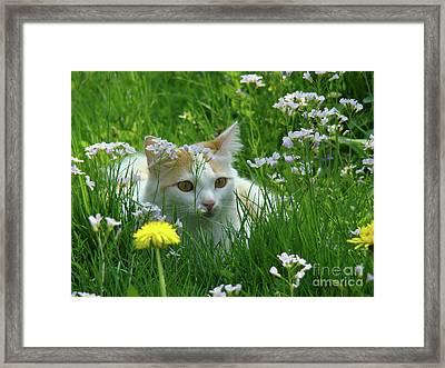 Flower Cat Framed Print by Bruno Santoro